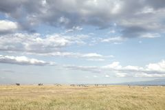 Dramatic cloud and open Grassland of Ol Pejeta Conservancy, Kenya Stock Photos