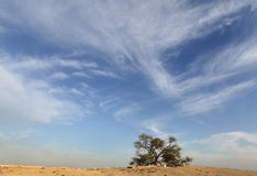 Dramatic cloud and the tree of life, Bahrain Royalty Free Stock Images