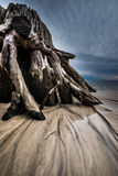 Dramatic Clouds Cypress Tree roots Carabelle Beach Florida Stock Photography