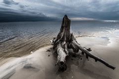 Dramatic Clouds Cypress Tree roots Carabelle Beach Florida Stock Images