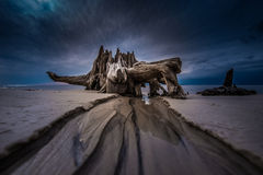 Dramatic Clouds Cypress Tree roots Carabelle Beach Florida Stock Image