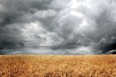 Dramatic clouds in field Stock Images