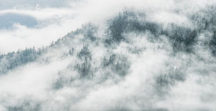 Dramatic Clouds Hide Forest View Stock Photos