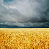 Dramatic clouds over golden field Royalty Free Stock Photography