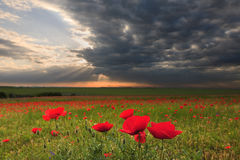 Dramatic clouds over poppy field at sunset Stock Photo