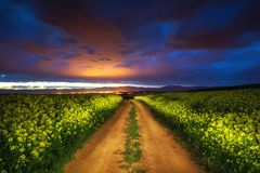 Dramatic clouds over the rapeseed field, beautiful spring night.  royalty free stock images