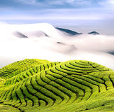 Dramatic clouds and tea garden Royalty Free Stock Image
