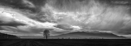 Dramatic cloudscape panorama. Ominous sky with a lonely tree on the foreground royalty free stock photography