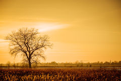Dramatic colorful evening scene with Silhouette of leafless tree in sunlight. Stock Photos