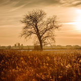 Dramatic colorful evening scene with Silhouette of leafless tree in sunlight. Royalty Free Stock Photography