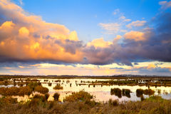 Dramatic colorful sunrise over swamp Royalty Free Stock Photography
