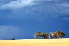 Dramatic ominous stormy sky over Australian countryside. Dramatic dark stormy sky and rain falling over a stand of Eucalyptus trees in farmland near Grenfell stock photography