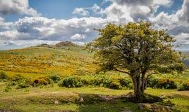 Dramatic dartmoor landscape royalty free stock photos