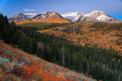 Dramatic dawn fall glow in the Wasatch Mountains. Stock Photography