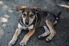 Dramatic dog. Looking dramatic dog on street Stock Image
