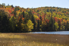 Dramatic fall colors and peat bog on shore of Russell Pond, New royalty free stock images