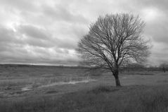 Dramatic fall landscape. With tree stock photography