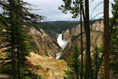 Dramatic Falls over Yellowstone. Lower Falls of Yellowstone framed by trees Royalty Free Stock Images