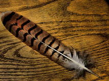 Dramatic Feather. A feather against a dramatic wood background Stock Images