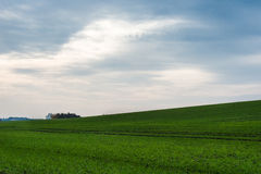 Dramatic field of green. With overcast weather Royalty Free Stock Photography