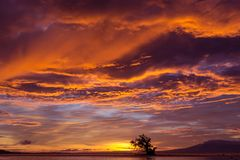 Dramatic fiery orange sunset. In Siquijor in the Philippines with a mangrove tree silhouetted against the glowing horizon under heavy stormy cloud cover royalty free stock photography