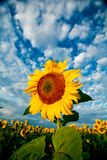 Dramatic flower Royalty Free Stock Images