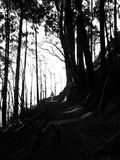 Dramatic forest hiking trail Stock Photos