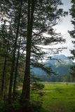 Forest in the mountains in the national park Durmitor, Montenegro royalty free stock photo