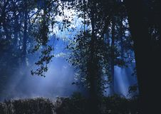 Dramatic Forest Mist Stock Photos