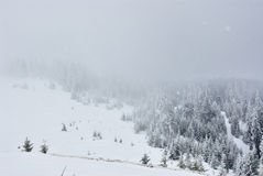 Dramatic forrest in mountains in snowfall Royalty Free Stock Images