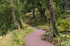 Dramatic forrest path Royalty Free Stock Image