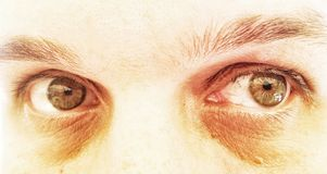 Dramatic green eyes Stock Image