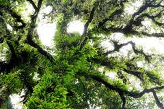 Dramatic green tree Stock Photo