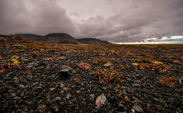 Dramatic Icelandic landscape with focus on the volcanic lava fie. Ld. Surface level Stock Image