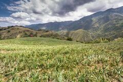 Free Dramatic Image Of Onion Farm On The Mountain Countryside Of Fields And Farms In The Caribbean, Dominican Republic. Stock Photos - 181092803