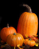Dramatic image of pumpkins on a black background Stock Photos