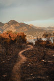 After a vegetation fire in Montenegro stock photos
