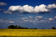 Dramatic Landscape. A dramatic landscape with white clouds. Canon 5D, 100-400, raw Royalty Free Stock Photos