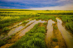 Dramatic landscape. Dramatic sky over road full of puddles surrounded by yellow colza, flowers Royalty Free Stock Photos