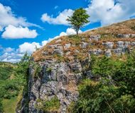 Dramatic Landscape View at Cheddar Gorge, Somerset, England. Famous Cheddar Gorge located in Somerset, England. The tree on the edge of the canyon with beautiful Royalty Free Stock Images