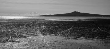 Dramatic Landscape view of Rangitoto Island Stock Images