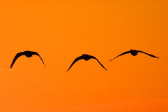 Dramatic Light. Three birds in the afternoon Stock Photo