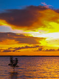 Dramatic Ocean Sunset. With single mangrove tree in Darwin, Australia royalty free stock photo