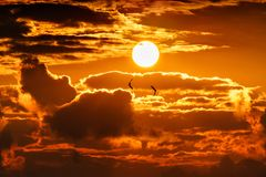 Dramatic orange golden sunset sky with sun disk among clouds and two seagulls flying. Beautiful scenery.  stock images