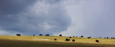 Dramatic Pastureland Stock Image