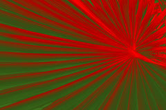 Dramatic pattern in palmetto leaves with Christmas colors red an Stock Images