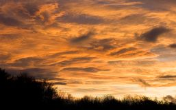 Dramatic peachy sunset sky over dark treeline. Dramatic clouds turn a peachy colour at sunset over a bare treeline Royalty Free Stock Photos