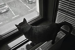 Dramatic photo taken of a black cat looks in window a  heavy rain announced for Chomutov city by the Czech Meteorological Institut Stock Photo