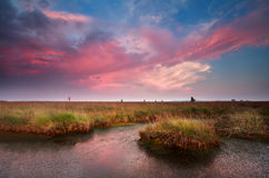 Dramatic pink sunset over bog Stock Photos