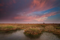 Dramatic pink sunset over swamp Stock Photography